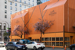 Hermès Blossoms (ruthlesscrab) Tags: downtown vancouver hermes plum blossom spring hoarding construction werehere wah hereios lightroom lenscorrection