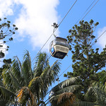 Cable car and Hoop Pine (Araucaria cunninghamii) thumbnail