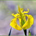 Spring Yellows
