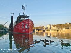 La famille canard en balade (Différents Regards - Fred Banchet) Tags: ngc lyon bateau bergesdurhône rhone canard