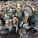 PHX Desert Botanical Garden IMG_2122