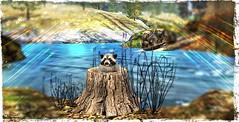 ~*SR*~ & ~*TD*~ Bayounimba Raccoon_001 (Mondi Beaumont) Tags: fantasy faire 19 2019 11th ff rfl relayforlife relay for life fight cancer sweet revolutions ~sweet revolutions~ ~sr~ telperion designs ~telperion designs~ ~td~ deco decorations mesh bayounimba garden gardening sim building crafting plants animals swamp elf elven voodoo cult cultural sl secondlife second tree stump raccoon nature