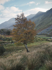 (Neil Bryce) Tags: snowdonia dinorwigbquarry slate autumn trees leaves golden industrial wales landscape llanberis