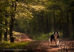 Mans best friend (Ade Ward Phototherapy.) Tags: sigma phototherapy nikon fforestfawr cardiff beautiful shadows light landscape scenery outdoors walking nature animals dogs