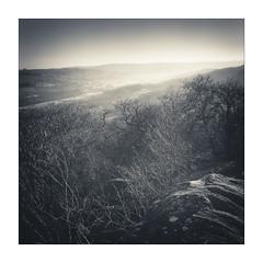 Nidderdale (gerainte1) Tags: nidderdale yorkshire film blackwhite woodland moor trees mist pancro400 hasselblad501
