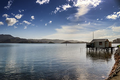 Otage Peninsula - New Zealand (Valentin.LFW) Tags: newzealand nouvellezeland south hemisphere photographer photography canon aotearoa birds wildlife landscape auckland