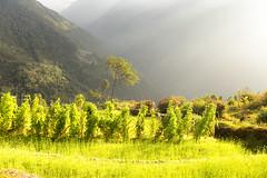 Nepal countryside (yan08865) Tags: