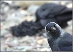 Hello (Rosie Chilton) Tags: seal