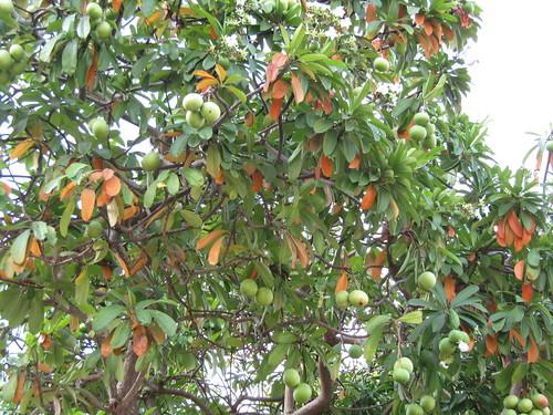 IMG_6690 deadly fruit