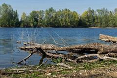 Hitdorfer See im April (KL57Foto) Tags: 2019 april badesee germany hitdorffrühling kl57foto landschaft leverkusen leverkusenhitdorf nrw nordrheinwestfalen omdem1 olympus see