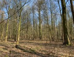 Laarbeekbos : landscape #3 (foto_morgana) Tags: arbres aurorahdr2019 belgië belgique belgium boisdelaerbeek bomen bos boudewijnpark brussel brussels brusselshoofdstedelijkgewest bruxelles forest foret iphonexsmax jette laarbeekbos nature naturereserve natuur natuurreservaat on1photoraw2019 reservanatural réservenaturelle trees