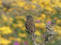 P1060243 (jesust793) Tags: birds pajaros primavera spring