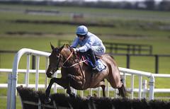 RP_ID00345658 (Horse Racing Ireland) Tags: fairyhousecheltenham countymeath ireland