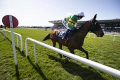 RP_ID00345655 (Horse Racing Ireland) Tags: fairyhousecheltenham countymeath ireland