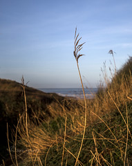 The tallest grass . (Through Bri`s Lens) Tags: devon light croyde grass warmlight sea red yellow brianspicer canon5dmk3 canon1635f4