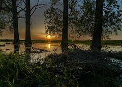DSC03789-1 (tobiashenrichs) Tags: landscape landschaft lowerrhine niederrhein abendrot sun sonne sonnenuntergang sundowner