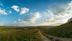 Quiet afternoon (ZeGaby) Tags: champagne clouds hdr irix15mm landscape marne naturephotography nuages panoramique paysage paysagedechampagne pentaxk1 sun sunlight vignes vignobles vines vineyards avenayvaldor france