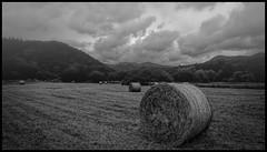 Paysage d'Auvergne (thierrybalint) Tags: paysage nature nb bw ciel sky nuages clouds foin nikon nikoniste balint thierrybalint auvergne landscape brume mist hay ngc