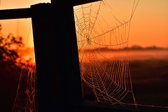 We knit a web to catch one tiny fly... (AlteredImages*) Tags: nikon silhouette burning golden dawn sun sunrise spiderweb web
