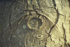 L'occhio del Noce (Silvia Kuro) Tags: noce albero tree cortex corteccia eye occhi occhio eyes wood woods forest trees alberi bosco fairytale walnut sight vision magic nature natura