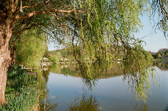 Könnyező (sárkánymacska) Tags: olympus om2n zuiko kodak pro image 100 lake könnyező fűz tó nature tree zöld green