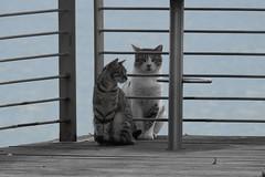 Двое (unicorn7unicorn) Tags: кошка набережная кот забор wah spotlight