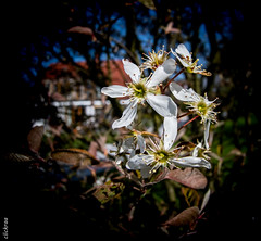 springtime-6601 (clickraa) Tags: blumen garten frühling