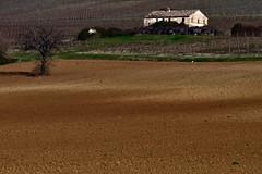 Il Casolare (luporosso) Tags: natura nature naturaleza naturalmente nikonitalia nikond500 campagna campi casale countryside country hills colline terra terraarata landscape landscapes plowedland alberi trees scorcio scorci marche italia italy