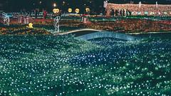 蝴蝶公園地景花海 (aelx911) Tags: a7rii a7r2 sony fe85 fe85f18 landscape light night taiwan taipei travel 台灣 台北 板橋 蝴蝶公園 花海