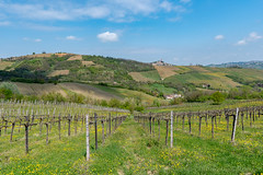 Vineyards of Oltrepo Pavese in April (clodio61) Tags: april cicognola europe italy lombardy oltrepopavese pavia agriculture color country day field green hill land landscape nature outdoor photography plant rural scenic spring springtime sunny town village vine vineyard