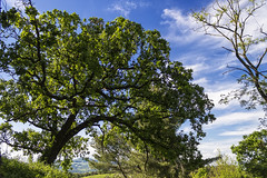 gli alberi...sono come noi?... / the trees ... are they like us? ... (Eugenio GV Costa) Tags: approvato alberi cielo nuvole trees sky clouds