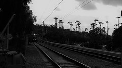 The Palm Tree Express (Rand Luv'n Life) Tags: odc our daily challenge train san diego trolley railroad tracks palm trees silhouette evening sunset monochrome blackandwhite outdoors