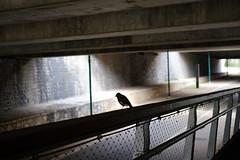 (TLV and more) Tags: urban bird street fujifilmxpro2 xf35mmf2rwr