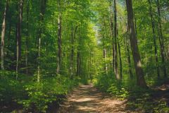 KRIS9200 (Chris.Heart) Tags: hiking túra okt hungary forest nature természet