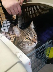 FOUND tabby cat near Centre and 32nd Ave NE. Pls msg if you know this cat. Pls RT share help to find family YYC Pet Recovery shared a post. FOUND near Centre and 32nd Ave NE. Isn't the friendliest so I don't believe it belongs to someone but posting here (yycpetrecovery) Tags: ifttt april 17 2019 0111am