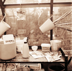 Før det går i gang i drivhuset (LarsHolte) Tags: mamiya c330 mamiyac330 tlr twinlensreflex twinlens mamiyasekor 65mm f35 6x6 square squareformat 120 film 120film analog analogue foma fomapan fomapan100 fomapan100professional 100iso mediumformat blackandwhite classicblackwhite bw monochrome filmforever filmphotography caffenolc ishootfilm larsholte homeprocessing denmark danmark garden greenhouse