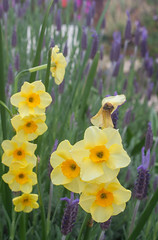 IMG_1402 (Pigeon Travels) Tags: 2019 arboretum california flowers garden nature santacruz trees ucsantacruzarboretum