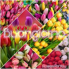 #buongiorno #tulipani #link #page #facebook #Flowers #For #You #Tiziana #Mosso (tizianamosso) Tags: mosso tiziana you link tulipani buongiorno flowers page for facebook