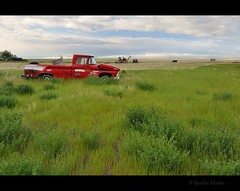 surprised by huge hearts (Gordon Hunter) Tags: old abandoned truck red pickup auto field prairies grass cold morning country rural derelict canada gordon hunter nikon d5000