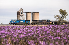 "Hometown Mascot (Seven Tracks Photography) Tags: cn canadiannational illinoiscentral c408w ge ""blue devil"" hayes illinois x335 locomotive photography outdoor train railroad manifest freight"