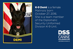 Meet K-9 Demi (Diplomatic Security Service) Tags: departmentofstate canines dogs policedogs uniformedprotectiondivision