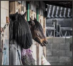 All ok with you ? DSC_2912 (dark-dave) Tags: horses equine claytonledale mirefoldfarm lancashire
