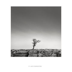 Yorkshire Grit (les forrester) Tags: landscape scapes square blackandwhite monochrome limestones tree life yorkshire thedales formatthitec cansoninfinity leica leicasl leicauk le longexposure photography