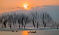 Solitude 661 (Wim Koopman) Tags: tree silhouette flowing glowing mist fog sunset clouds cloudage candian goose water pond lake reflection orange mood atmosphere
