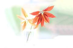 Delicate (Simon Downham) Tags: pastel pastels leaves leaf still life stilllife fine art artistic pale fuji fujinon fujifilm 56mm lens floral garden stem window