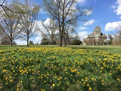 Cylburn Arboretum ~ Daffy meadow (karma (Karen)) Tags: baltimore maryland cylburnarboretum parks gardens flowers daffodils mansions estates historichome iphone nrhp cmwd topf25