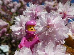 Rosa Blüten (captain_joe) Tags: pink rosa astronaut spaceman toy spielzeug 365toyproject lego minifigure minifig kirsche cherry blüten blossoms