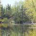 pond at PNE sanctuary