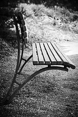 Rustpunt... #2019#groningen#noorderplatsoen#bench#park#seat#bw#bwphotography#bnw#bnwphotography#love#blackandwhite#photography#photooftheday#moodygrams#visitgroningen#discovergroningen#explore#outdoor#wanderer#wanderlust#street#streetphotography#city#city (agnes.postma.hoogeveen) Tags: love photooftheday wanderlust loveit moodygrams city noorderplatsoen bwphotography streetphotography discovergroningen groningen blackandwhite wanderer bw street cityphotography pics park bench explore instadaily bnw seat outdoor 2019 urban bnwphotography visitgroningen photography