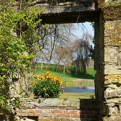 Scotney Castle: an open window - explored (quietpurplehaze07) Tags: ღღentreamigosღღproyecto365días scotneycastle oldcastle window windowwednesdays windowwednesday wallflowers yellow view garden explored